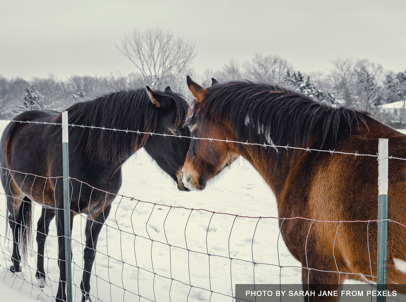 Equine care in winter